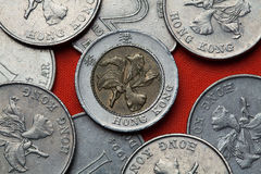Coins of Hong Kong. Flowers of bauhinia blakeana also known as Hong Kong orchid depicted in the Hong Kong dollar coins Stock Image