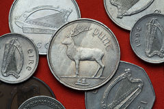 Coins of Ireland. Red deer (Cervus elaphus). Depicted in the Irish one pound coin stock image