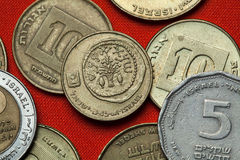 Coins of Israel. Lulav between two etrogim Royalty Free Stock Photography