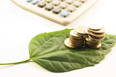 Coins and leaf. On whie background royalty free stock photos