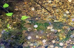 Coins lie on the bottom of the lake in the city park stock photos