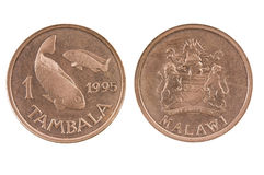 Coins of Malawi. Stock Image