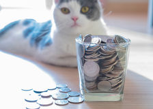 Coins in money jar saving money Royalty Free Stock Photos