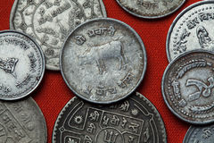 Coins of Nepal. Hindu sacred cow Stock Images