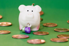 Coins and pig. On green background Stock Image