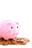 Coins and piggy bank Stock Photography