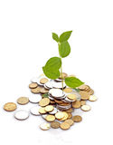 Coins and plant Stock Image