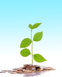 Coins and plant stock images