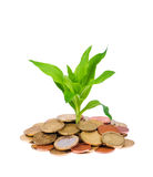 Coins and plant Royalty Free Stock Photo