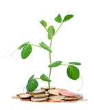 Coins and plant Royalty Free Stock Images