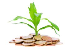 Coins and plant Royalty Free Stock Image