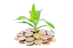 Coins and plant Royalty Free Stock Photography