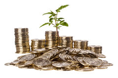 Coins and Plant Stock Photography