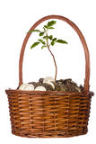 Coins and Plant in a Basket Royalty Free Stock Photos