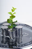 Coins with plant and clock, isolated on white background. Royalty Free Stock Photo