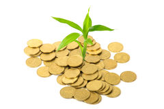 Coins and plant - ecology concept Stock Images