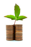 Coins With Plant Growth. Stack of copper coins with plant growth Royalty Free Stock Photography
