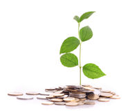 Coins and plant isolated Royalty Free Stock Image