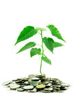 Coins and plant isolated Stock Photos
