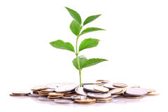 Coins and plant isolated on white Royalty Free Stock Photography