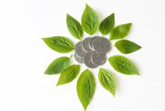 Coins and plant leaves flower shape isolated Royalty Free Stock Photos