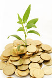 Coins and plant  on white background for Rich Royalty Free Stock Images