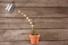 Coins pouring from watering can into plant, saving concept. Top view of coins pouring from watering can into plant, saving concept stock photos