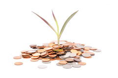 Coins Scattered Around The Base Of A Baby Seedling - Profitable Stock Photography