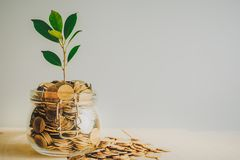 coins and seed in bottle on wood table background,Business investment growth concept