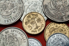 Coins of the Seychelles. Manioc plant (Manihot esculenta) stock images