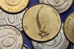 Coins of Slovenia Royalty Free Stock Photos
