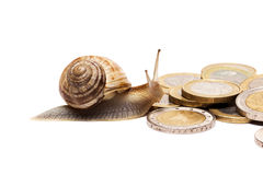 Coins and snail stock image