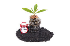 Coins in soil with young plant and Alarm clock Royalty Free Stock Photo