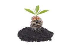 Coins in soil with young plant Stock Image