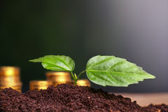 Coins in soil with young plant. Money growth concept Stock Photography