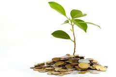Coins sprout Royalty Free Stock Photography