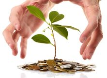 Coins sprout,  hands Royalty Free Stock Photo