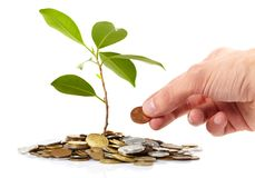 Coins sprout,  hands Stock Image