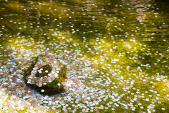 Coins in a wishing well in Kyoto. Japanese coins in a wishing well in a temple in Kyoto stock photography