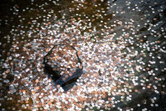 Coins in a wishing well in Kyoto Stock Image