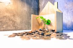 coins in wood houses There are many coin and trees leaf grow.Saving to buy a house or home savings concept with money coin stack royalty free stock photo