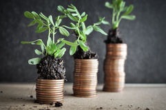 Coins with young plants in soil. Money growth concept Stock Images