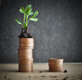 Coins with young plants in soil. Money growth concept Royalty Free Stock Photography