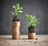 Coins with young plants in soil. Money growth concept Royalty Free Stock Photos