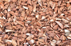 Coir Stock Photo