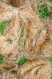 Coir rope made from the plaited husk of the coconut Royalty Free Stock Photography