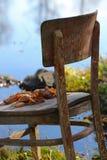 Coisas surpreendentes em torno de nós na natureza - cadeiras esquecidas Fotografia de Stock Royalty Free