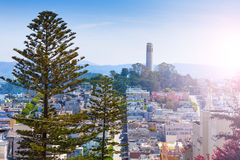 Coit Tower behind fir tree over the San Francisco Stock Photography