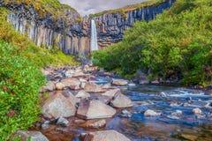 Coiumns водопада и базальта Svartifoss в национальном парке Vatnajokull Soutern Исландия стоковое фото rf