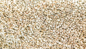 Coix seed Royalty Free Stock Photos
